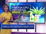 Kinerja CPO Indonesia Makin Loyo