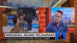 VIDEO: Mengenal Karakter Anjing Peliharaan