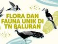 INFOGRAFIS: Flora dan Fauna Unik di TN Baluran