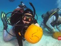 VIDEO: Sambut Halloween, Penyelam Ukir Labu di Bawah Laut