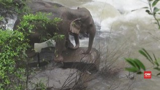 VIDEO: Enam Gajah Liar Tewas Tergelincir di Air Terjun