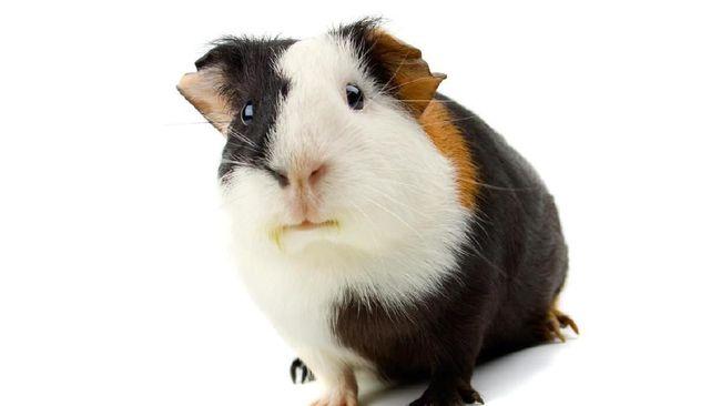 Warga Ekuador Punya Es Krim Rasa Tikus Belanda