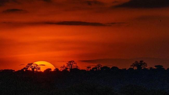 Senja di Desa Loibor Siret, Tanzania, yang menjadi rumah bagi kawanan singa Afrika yang terancam punah. (AP Photo/Jerome Delay)