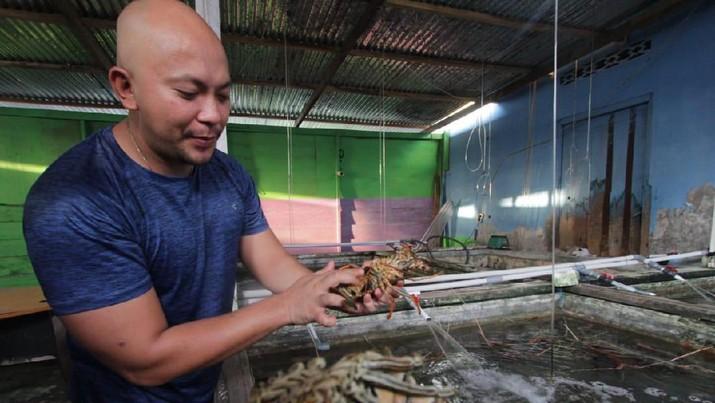 Salah satu debitur BNI Morotai Reagen Sumampouw menampung hasil tangkapan para nelayan lobster di Morotai, Maluku Utara, Selasa (8/10/2019).