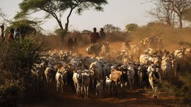 FOTO: Menjaga Auman Singa di Tanzania