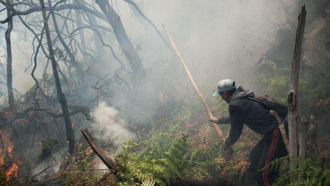 Kebakaran Kawah Putih Capai 15 Ha, Diduga Akibat Puntung