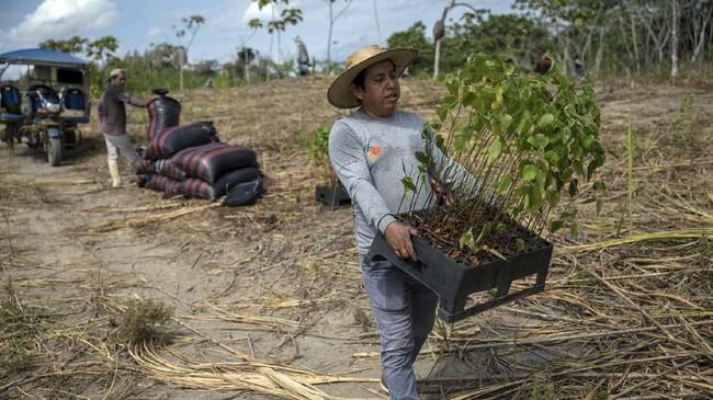 Desember lalu aksi penghijauan dilakukan dengan menanam lebih dari 6.000 anakan phon dari berbagai spesies tanaman asli Amazon.(AP Photo/Rodrigo Abd)