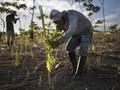 FOTO: Hadapi Perubahan Iklim, Peru Serukan Aksi Penghijauan