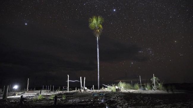 Upaya penghijauan hutan yang terfragmentasi dilakukan menggunakan bibit tanaman spesies asli hutan Amazon.(AP Photo/Rodrigo Abd)