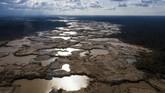 Luis Paulo Ferraz, sekretaris eksekutif nirbala Save the Golden Lion Tamarin mengatakan hutan ujan Atlantik menjadi salah satu bioma paling terancam lantaran lebih dari 90 persen pohon ditebangi.(AP Photo/Rodrigo Abd)
