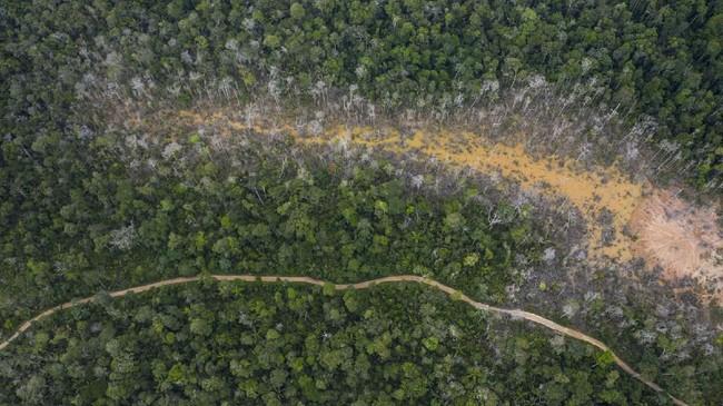 Pemerintah Peru pada awal 2019 menggaungkan program 'Operation Mercury', penjagaan gabungan kepolisian dan militer di area dalam hutan Amazon untuk menghentikan aksi pembalakan liar.(AP Photo/Rodrigo Abd)