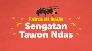 INFOGRAFIS: Fakta di Balik Sengatan Tawon Ndas