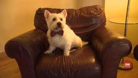 VIDEO: Pelihara Anjing Kurangi Risiko Kematian Dini