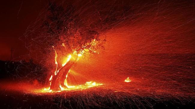 California sendiri merupakan salah satu daerah paling rawan kebakaran. Hampir setiap tahun, California dilanda kebakaran besar-besaran yang menyebabkan polusi udara tinggi. (Kent Porter/The Press Democrat via AP)