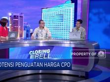 Diproyeksi Supply Sawit Turun & Harga CPO Dikisaran USD 540