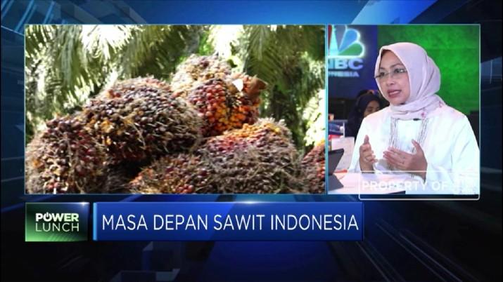 Terus Dihajar Eropa, Bagaimana Masa Depan Sawit Indonesia?