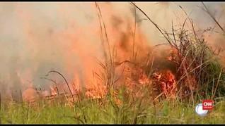 VIDEO: Api Bakar 120 Hektare Hutan Pantanal Brazil