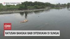 VIDEO: Ratusan Bangkai Babi Ditemukan di Sungai