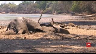VIDEO: Kekeringan Afrika Selatan, Satwa Liar Terancam Mati