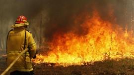 Ratusan Rumah Hancur Akibat Kebakaran Hutan di Australia