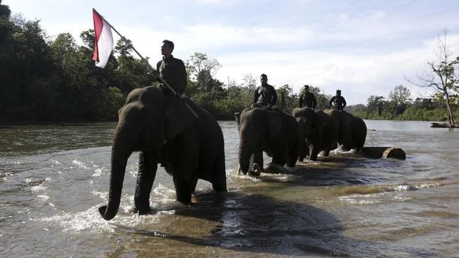 Para pawang gajah (mahout) melintasi sungai sambil membawa bendera merah putih seusai mengikuti peringatan hari pahlawan di Conservation Response Unit (CRU) Sampoiniet, Aceh Jaya, Aceh, Minggu (10/11/2019). (ANTARA FOTO/Irwansyah Putra)