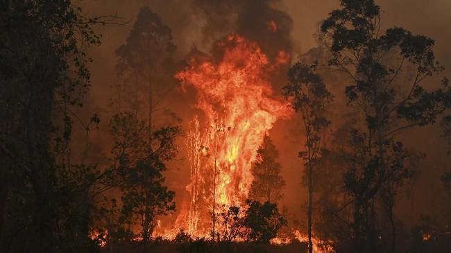 Kebakaran hutan di negara bagian New South Wales, Australia semakin parah. Asap karhutla dilaporkan telah menyebar ke kawasan Selandia Baru.(Photo by PETER PARKS / AFP)