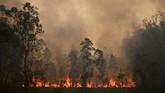 Sebaran titik api dan asap diperparah dengan angin kencang, suhu panas, dan kelembaban rendah. (Photo by PETER PARKS / AFP)