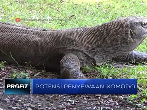 Tiru China, Indonesia Ingin Sewakan Komodo