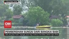 VIDEO: Pembersihan Sungai dari Ratusan Bangkai Babi