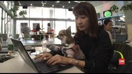 VIDEO: Jepang Izinkan Karyawan Bawa Peliharaan ke Kantor