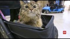 VIDEO: Terapi Kucing Untuk Penumpang Pesawat di Amerika
