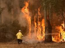 Hot! Australia Terpanas Dalam Sejarah, Suhunya 40,9 Derajat
