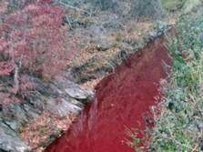 Hiii... Gegara Darah Babi, Sungai di Korsel Jadi Merah