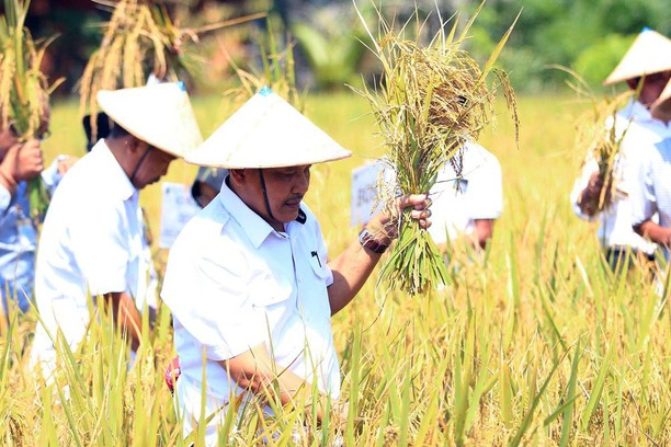 Panen Raya Padi Organik dan Lokakarya Pertanian