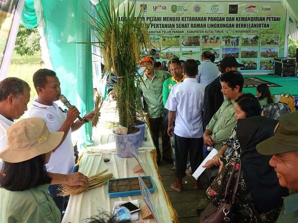 Pemaparan petani sektor unggulan mitra Lembaga Pengembangan Bisnis (LPB) Pama Bessai Berinta Bontang, Musmuliyadi mengenai perbandingan rumpun padi SRI organik dengan konvesional.