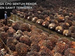 Cuan! Harga CPO Sentuh Rekor, Bisnis Emiten Sawit Merona