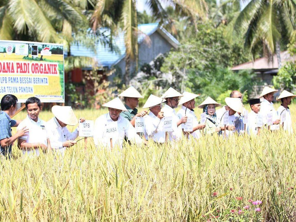 Sektor unggulan padi organik di Bontang, Kalimantan Timur ini merupakan program Yayasan Dharma Bhakti Astra (YDBA) bekerjasama dengan PT Pamapersada Nusantara melalui Lembaga Pengembangan Bisnis (LPB) Pama Bessai Berinta untuk menjadikan UMKM mandiri, naik kelas, awet, gres dan go global.