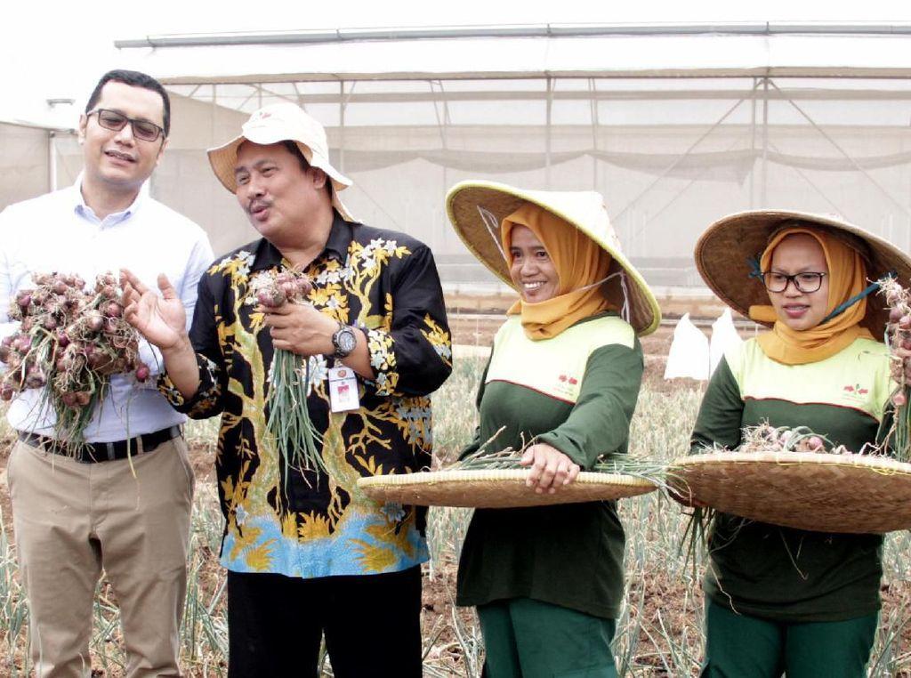 Kementerian Pertanian mendorong petani untuk mengembangkan budidaya bawang merah menggunakan biji karena hemat biaya.