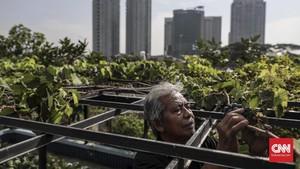 FOTO: Berkebun di Lahan Sempit Perkotaan