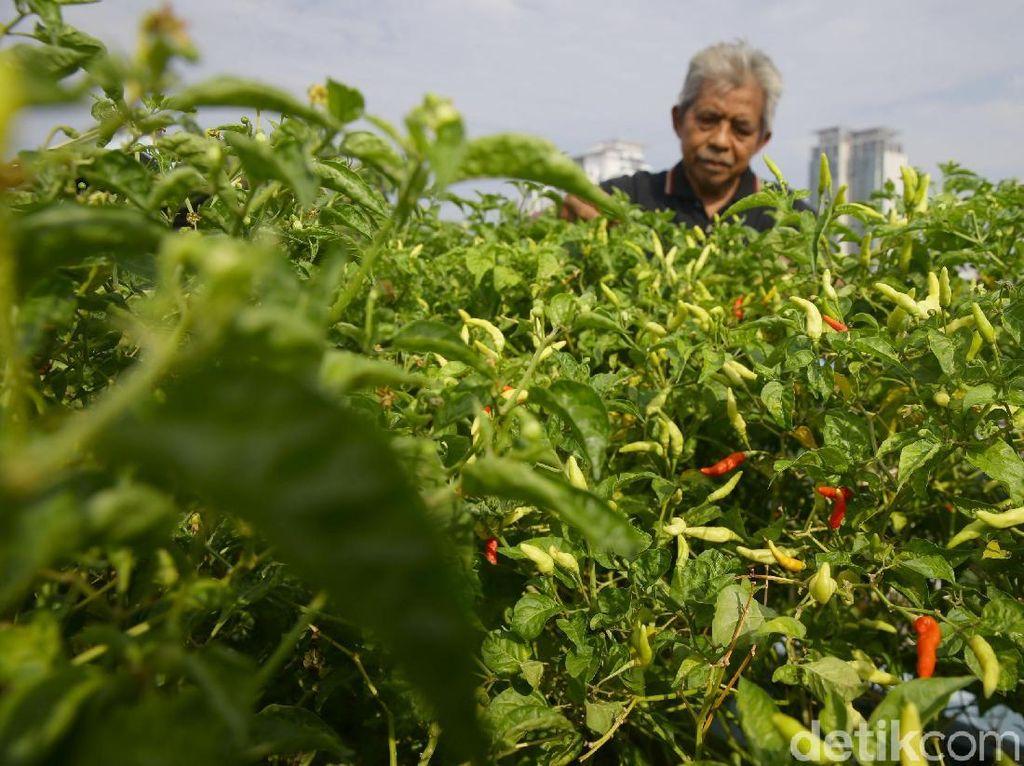 Konsep tersebut menjadi solusi masyarakat Jakarta untuk bercocok tanam atau berkebun di tengah-tengah tingginya harga lahan di Ibu Kota.