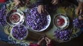 Dari mahalnya harga safron, penduduk hanya sedikit menikmatinya. Belum lagi bila cuaca ekstrim melanda, menjadi 'malapetaka' bagi pendapatan mereka. (AP Photo/Mosa'ab Elshamy)