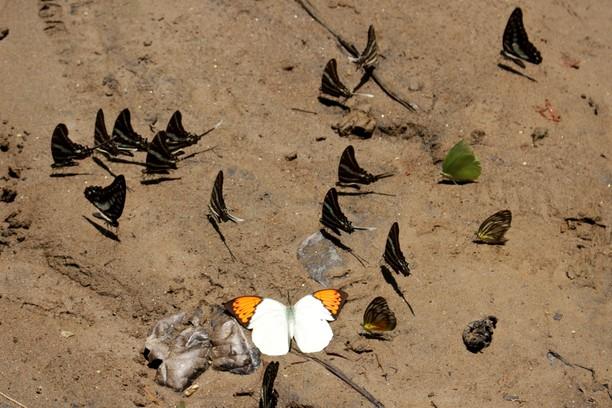Melihat TN Babul di Maros yang Jadi Taman Warisan Asean