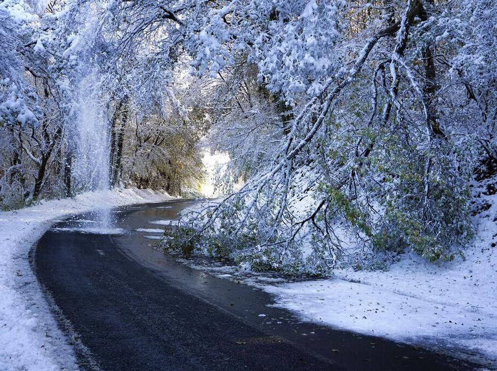 Hujan salju yang lebat ini telah menumbangkan pohon-pohon dan memutus aliran listrik serta menimbulkan gangguan lalu lintas. Sejumlah kereta api juga telah dievakuasi dan para penumpang dipindahkan ke jalur lain atau diinapkan di hotel-hotel. (Foto: AP)