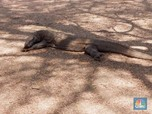 Tiket Rp 80 Ribu Jadi Rp 14 Juta, Ini Penampakan Pulau Komodo