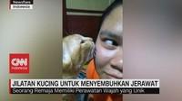VIDEO: Unik, Perawatan Jerawat Dengan Jilatan Kucing