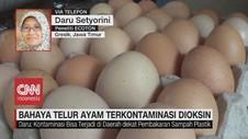 VIDEO: Ratusan Telur di Tropodo, Jatim Terkontaminasi