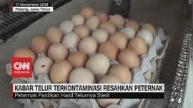 VIDEO: Isu Telur Terkontaminasi Racun Resahkan Peternak
