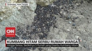 VIDEO: Kumbang Hitam Serbu Rumah Warga Grobogan Jateng