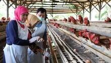 Khofifah Imbau Masyarakat Tak Usah Cemas Konsumsi Telur Jatim
