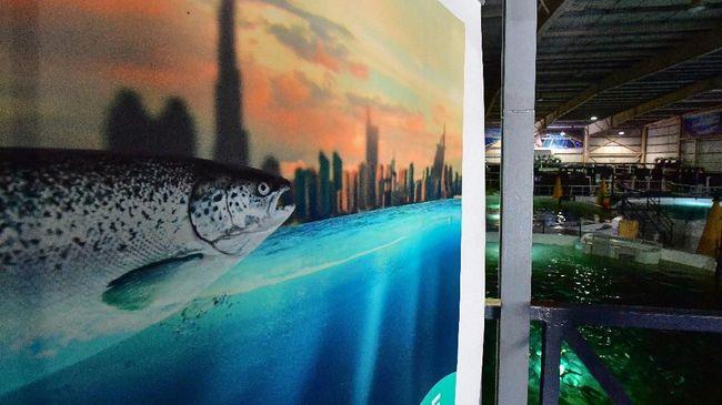 Ambisi Dubai 'Memanen' Salmon di Gurun Panas